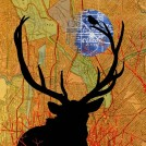 Wapiti and Passerine (collage, 2012)